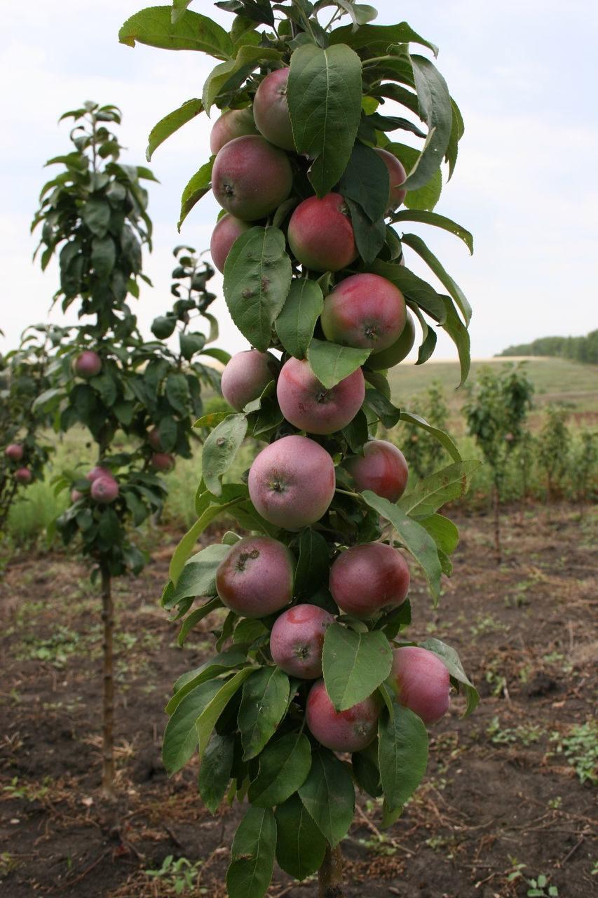 выкройка жакета на сколько сантиметров подрастает яблоня комплекс Москве